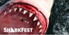 SharkFest vs. Shark Week: Battle of the Ratings