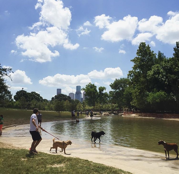 Dog Friendly Houston