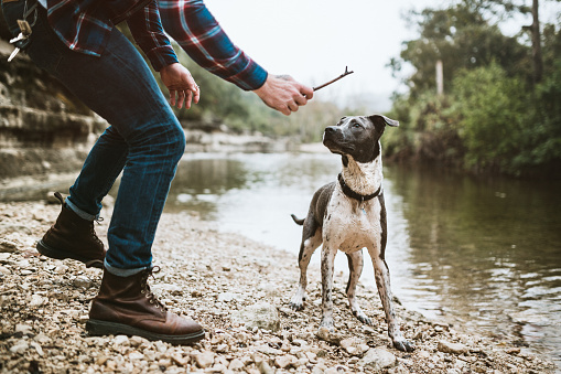 5 Best Places to Take Your Dog in Austin